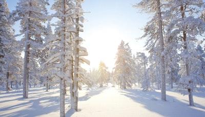 핀란드의 가장 큰 혜택, 사람
