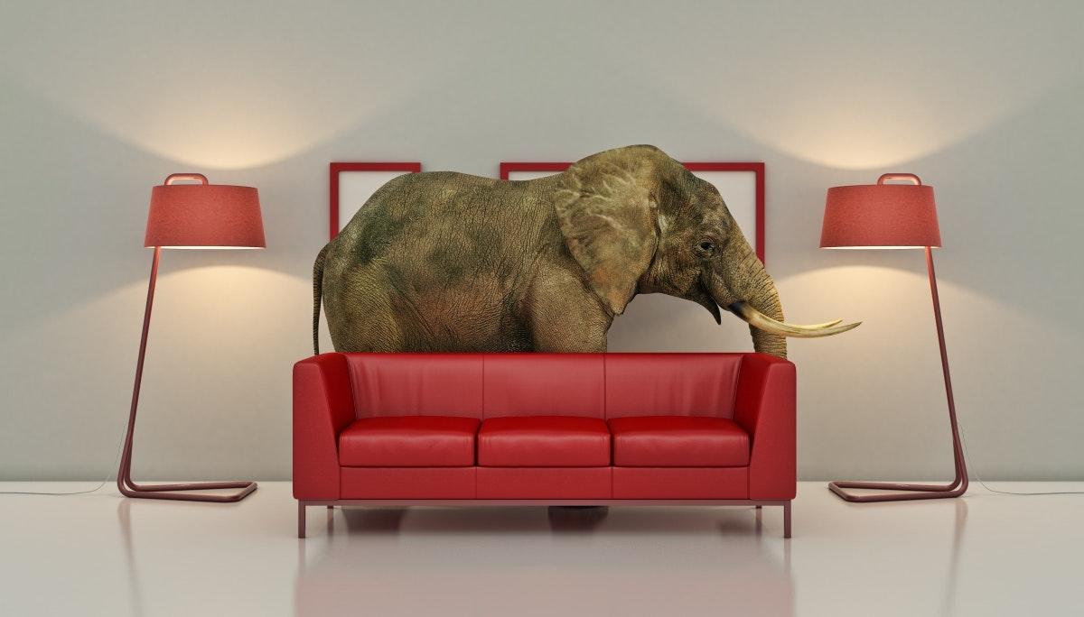 큐레이터의 말: 중국은 방 안의 코끼리일까?