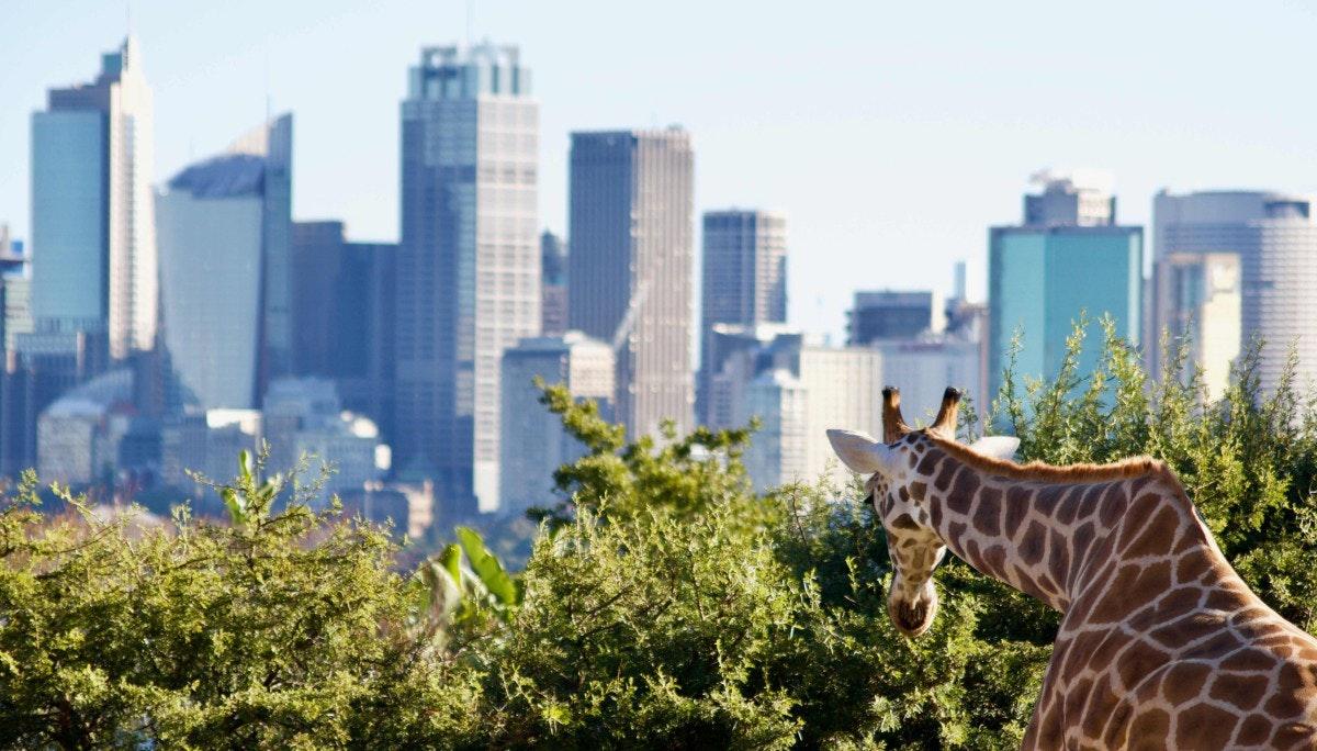 도시와 자연의 공존에 미래가 있다