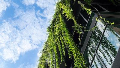 자연X도시 모델, 바이오필릭 시티의 등장
