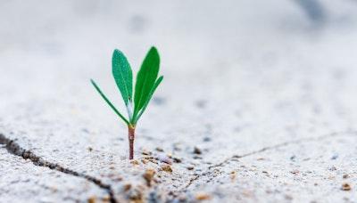 살아보고 결혼하기(2): 자영업의 새로운 성장 방식